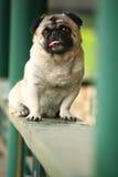 Cane di animale domestico divertente immagine stock libera da diritti
