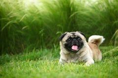 Cane di animale domestico divertente Fotografia Stock Libera da Diritti