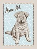 Cane di animale domestico domestico Immagini Stock