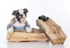 cane di bird-watching immagini stock libere da diritti