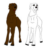 Cane di Brown coloring Illustrazione di vettore Immagine Stock