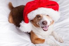 Cane di Buon Natale Fotografia Stock Libera da Diritti