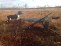 Cane di caccia Fotografia Stock Libera da Diritti