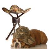 Cane di caccia divertente Fotografie Stock Libere da Diritti