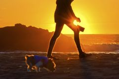 Cane di camminata della donna sulla spiaggia dell'oceano al tramonto Fotografie Stock