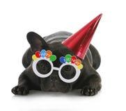 Cane di compleanno Immagine Stock