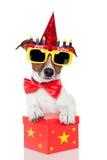Cane di compleanno Fotografie Stock Libere da Diritti