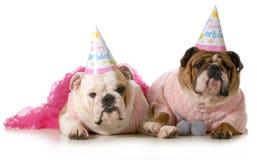 Cane di compleanno Fotografie Stock