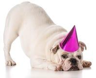 Cane di compleanno Fotografia Stock Libera da Diritti
