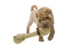 Cane di cucciolo di Shar-Pei con un osso Fotografie Stock Libere da Diritti