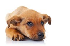 Cane di cucciolo esterno sveglio Fotografia Stock