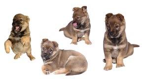 Cane di cucciolo sveglio Fotografia Stock Libera da Diritti