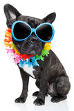 Cane di estate di festa Fotografia Stock