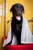 Cane di felicità che prende un bagno di bolla fotografia stock libera da diritti
