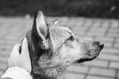 Cane di Fidelity fotografia stock