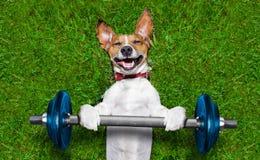 Cane di forma fisica Fotografie Stock