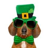 Cane di giorno della st Patricks immagine stock libera da diritti