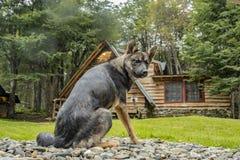 Cane di Huski del siberiano che riposa sulla terra fotografie stock