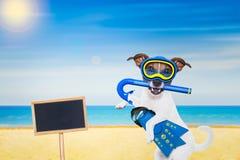 Cane di immersione con bombole Fotografie Stock