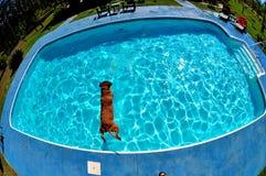 Cane di immersione subacquea Fotografia Stock