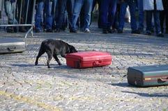 Cane di individuazione della droga Fotografie Stock