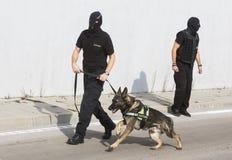 Cane di individuazione della droga della dogana Immagini Stock