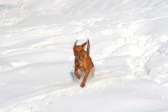 Cane di inverno Fotografia Stock