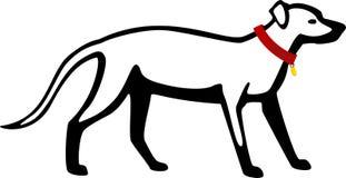 Cane di Labrador con il collare Fotografia Stock Libera da Diritti