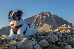 Cane di Melody Super ed il picco di Gran il Sasso fotografie stock