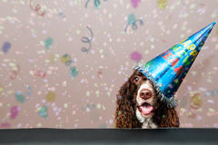 Cane di nuovo anno felice Immagini Stock
