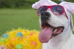 Cane di Pasqua Immagini Stock Libere da Diritti