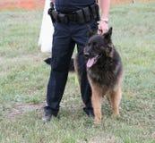 Cane di polizia immagine stock