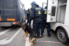 Cane di polizia Immagini Stock Libere da Diritti