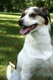 Cane di primavera Fotografia Stock
