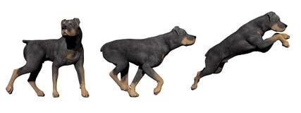 Cane di Rottweiler - 3D rendono illustrazione di stock