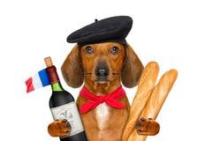 Cane di salsiccia francese fotografie stock libere da diritti