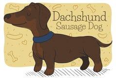 Cane di salsiccia o di Serene Dachshund che aspetta il suo Master, illustrazione di vettore royalty illustrazione gratis