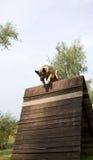 Cane di salto sopra la transenna Fotografia Stock