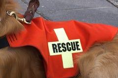 Cane di salvataggio e di ricerca. Fotografia Stock