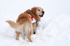 Cane di salvataggio nell'azione fotografia stock libera da diritti