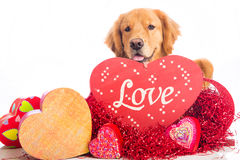 Bacio del cane di giorno dei biglietti di s valentino - Colore del giorno di san valentino ...