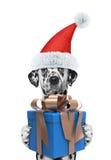 Cane di Santa con il regalo del nuovo anno Fotografia Stock