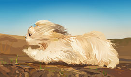 Cane di Shih Tzu illustrazione vettoriale