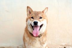 Cane di sorriso con la sabbia sul fronte immagini stock libere da diritti