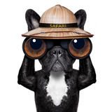 Cane di sorveglianza con il binocolo immagini stock libere da diritti