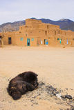 Cane di Taos Immagine Stock Libera da Diritti