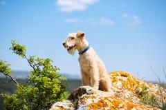Cane di Terrier nelle montagne su un fondo del cielo Fotografia Stock