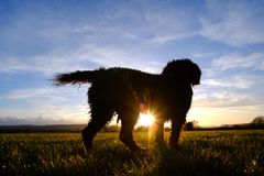 Cane di tramonto Fotografia Stock Libera da Diritti