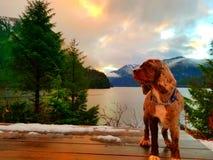 Cane di tramonto fotografia stock