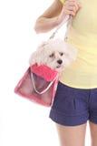 Cane di trasporto della mamma in borsa immagini stock